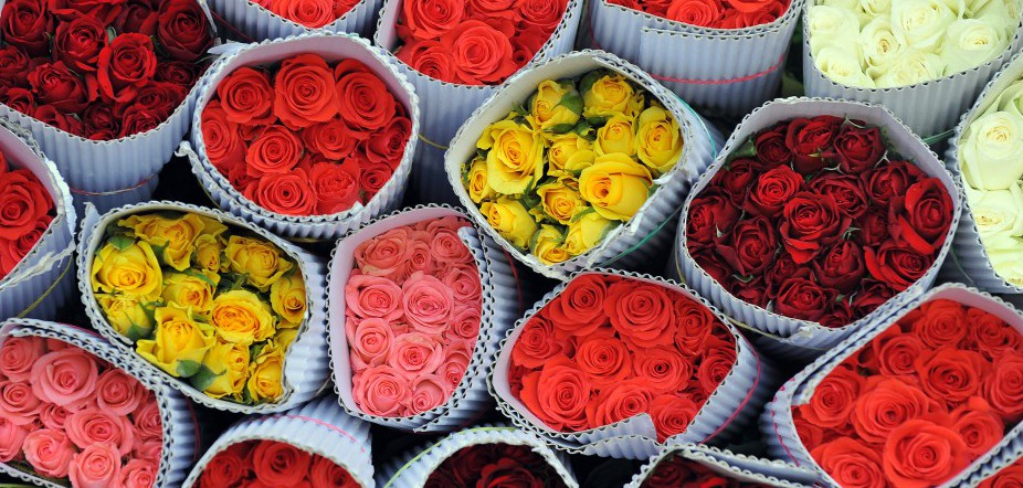Roses in various colours packed for desp