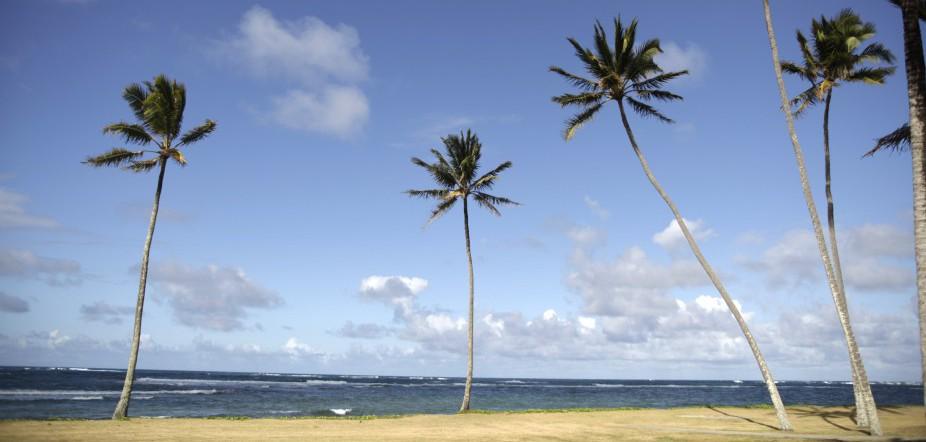 #1442 – Islands