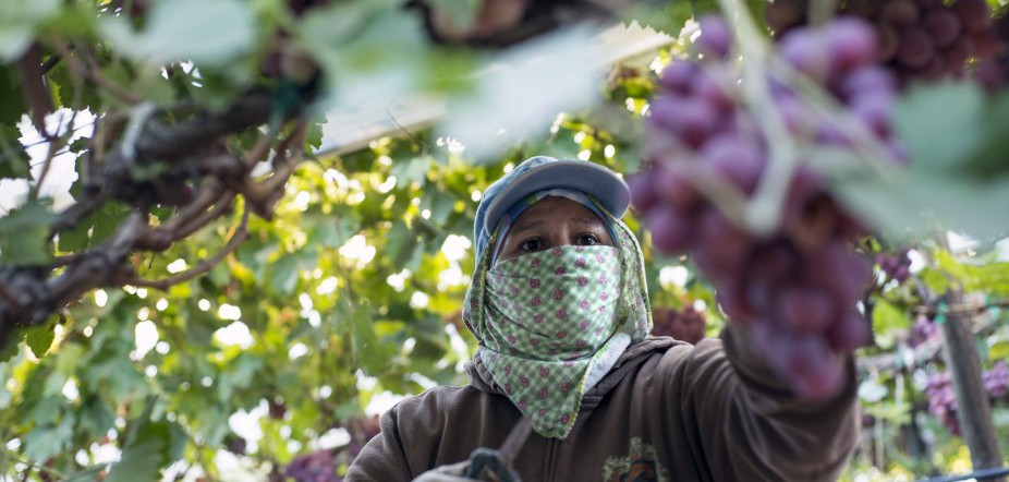 California Drought's Effect On Farmworkers