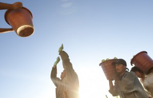 Farmworkers in Florida picking tomatoes are paid by the bucket photo courtesy FOOD CHAINS