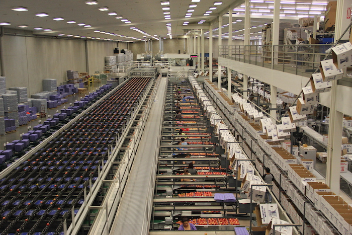 Apples at Washington Fruit are sorted electronically and by hand based on size and color.